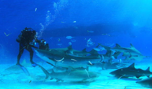 Reef_sharks_bahamas