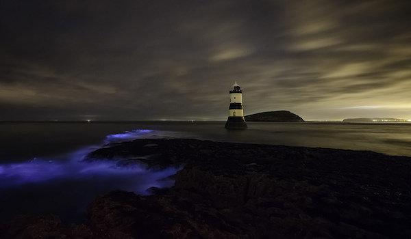 Bioluminescent_Algae_in_Waves