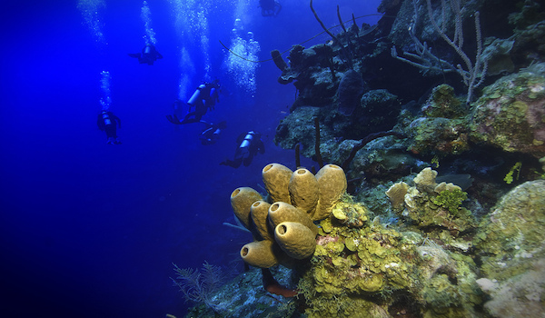 scuba Diving The Cayman Islands