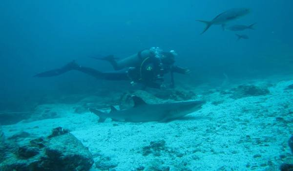Scuba_diving_the_galapagos_islands
