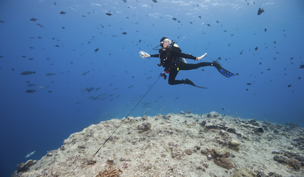 Reef_hook_scuba_diving