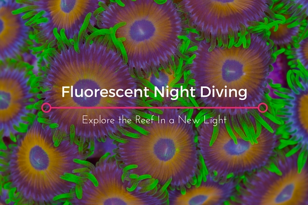 Fluorescent_night_diving=