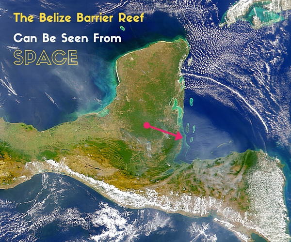 6 Belize Barrier Reef Facts Every Scuba Diver Should Know
