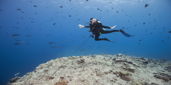 Reef_hook_dive_palau