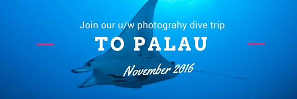 check out our u/w photo dive trips
