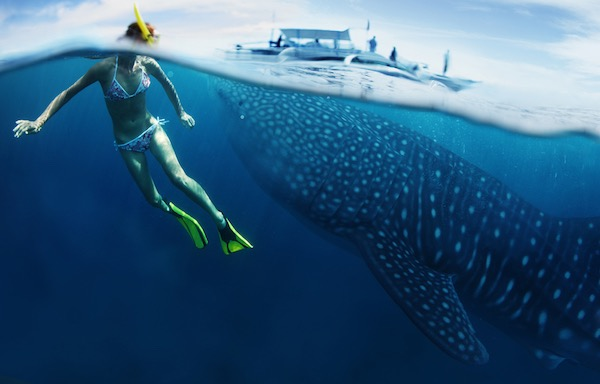 Snorkeling_with_whale_sharks
