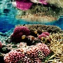 Thumb_healthy_coral_reef