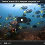 Thumb_video__marine_biology_101___seagrass__mangroves__and_rock_habitats_-_book_your_dive