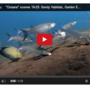 Thumb_video-marine-biology-101-sandy-habitats