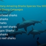 Thumb_sharks_species_galapagos