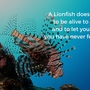 Thumb_lionfish_hunt__2_