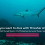 Thumb_dive_thresher_sharks_monad_shoal