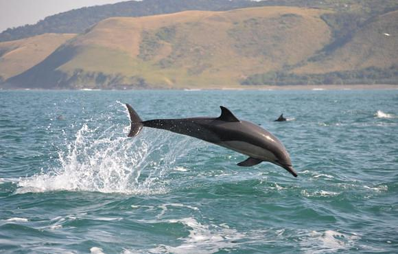 dolphin south africa