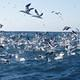 birds at sardine run