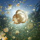 jelly_fish_lake_palau