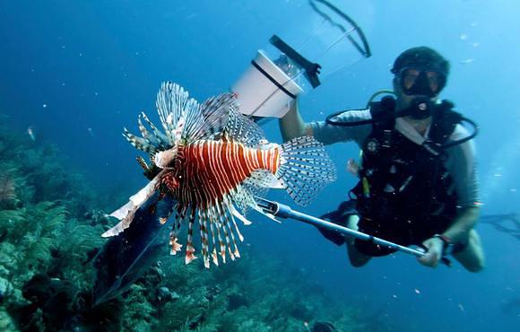 Lionfish_spearing_belize