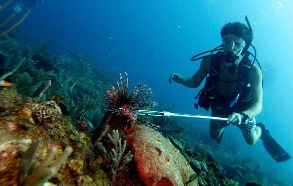 spear_lionfish