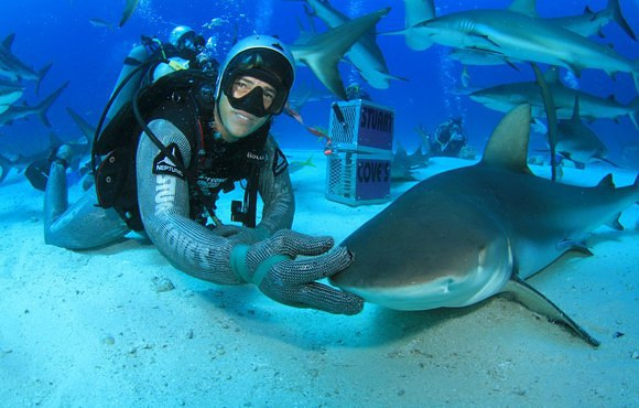 bahamas reef shark
