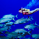 Coral-_Sea_Trevally_and_Diver
