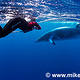 Minke-Whale-Mike-Ball-Dive-Expeditions