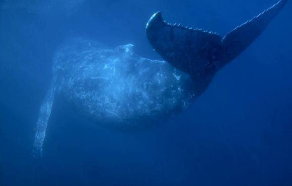 humpback_whale_south_africa