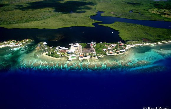 scuba dive Utila with Coral View Beach Resort