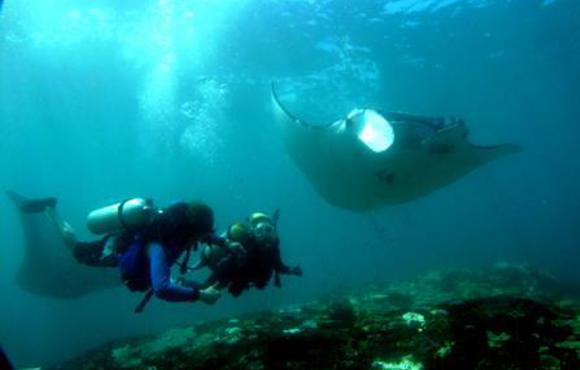 manta diving Bali