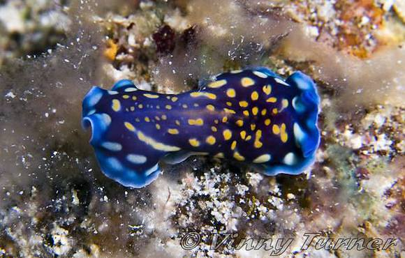 nudi branch gili air