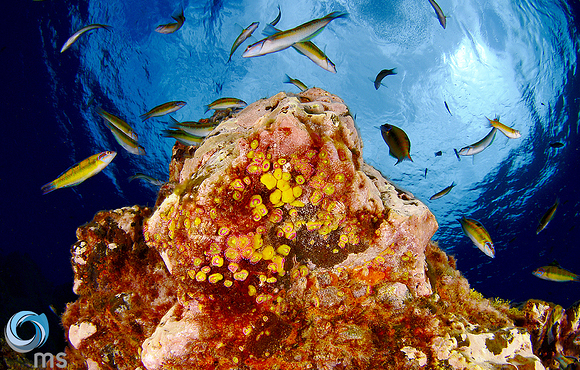 coral reef azores