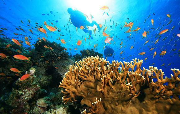 coral_reef_andaman_islands