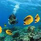reef_fish_andaman_islands