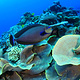 reef_fish_palau