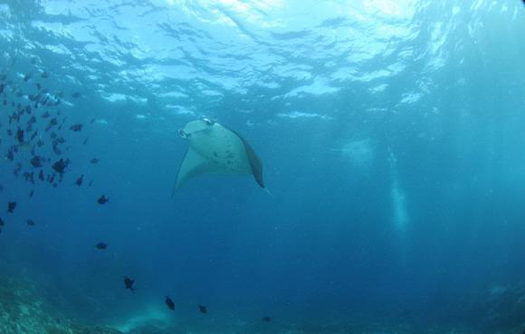 Manta_Point_Nusa_Penida