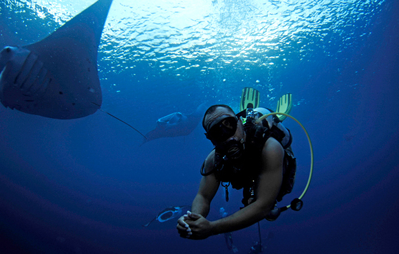 Diving_With_Manta_Rays_in_Palau