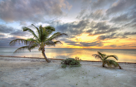 palm_trees_black_bird_caye_resort_belize