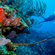 scuba_dive_belize