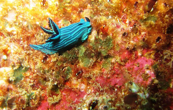nudibranch_galapagos