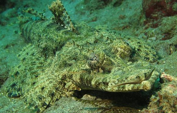 padang_bai_crocodile_fish