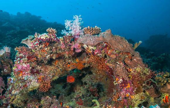 coral_reef_maldives