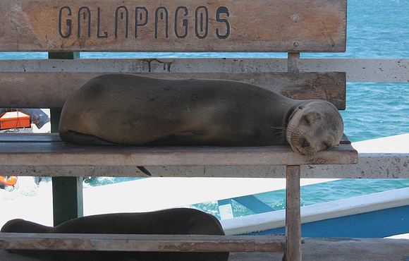 galapagos_sea_lion
