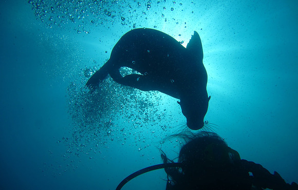 scuba_dive_sea_lion_galapagos