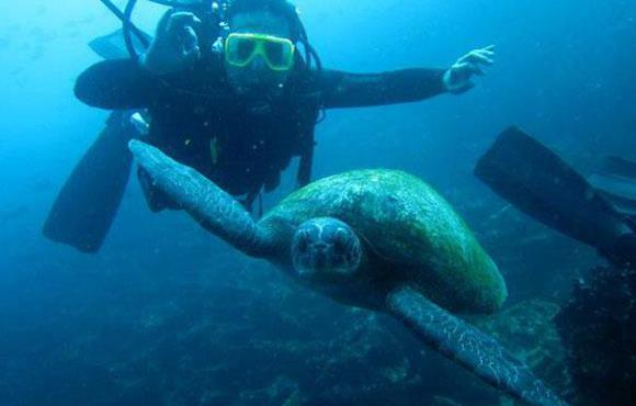 Diving_with_Galapagos_Sea_Turtles