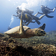 scuab_diver_and_turtle