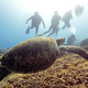 turtle_and_scuba_divers