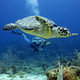 underwaterlife_Turtle
