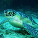 turtle_Scuba_Diving_in_Sint_Maarten