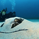 ray_Scuba_Diving_in_Sint_Maarten