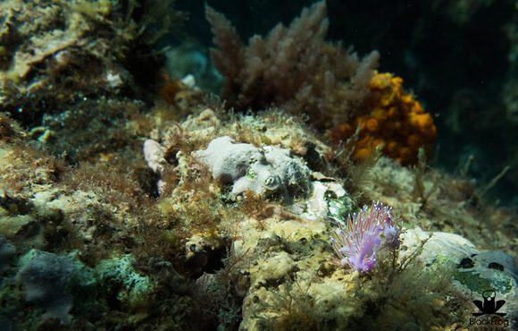 nudibranch_spain