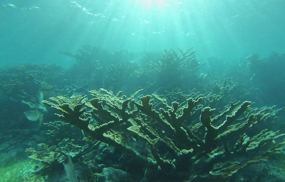 coral_reef_belize