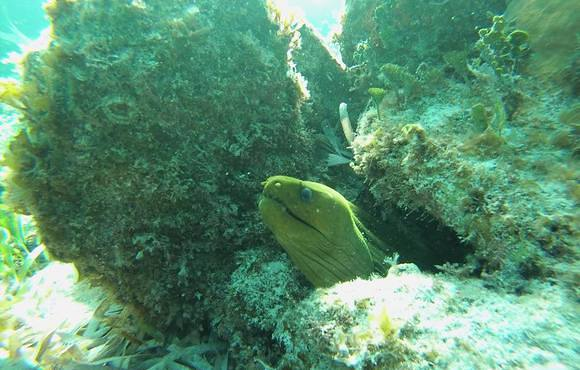 moray_eel_belize